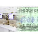 Quantum AR - EEG dla zwierząt